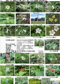 Photo_20200725064002